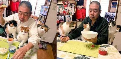 包圍餐桌 住持腿上站滿貓照夾菜
