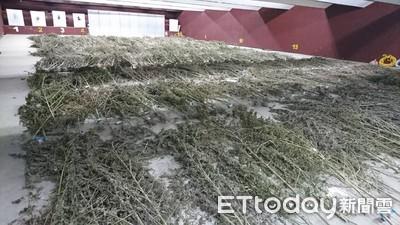 台東首破上甲大麻園 市值2.3億