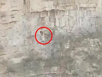 狗狗困30米深峭壁  主人垂降相救