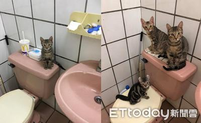 浴室會長貓!3虎斑搶看奴才洗澡