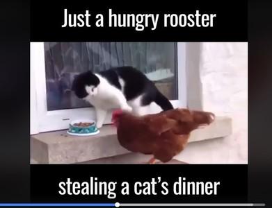 小貓食物被牠硬搶 出拳攻擊趕不跑