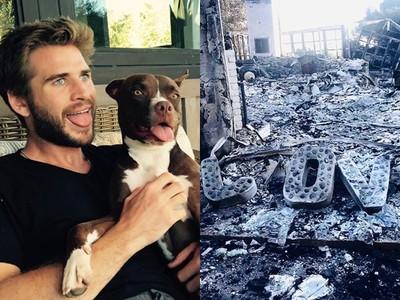 雷神弟從大火救出16寵物 麥莉還原經過