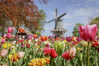歐洲700萬株鮮花,要你擁抱春天