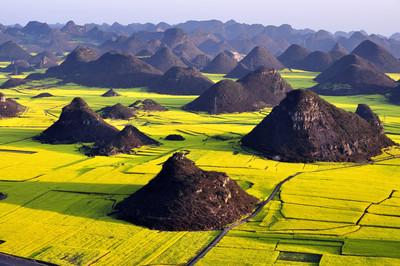 走進中國鄉村 徜徉在黃金花海中