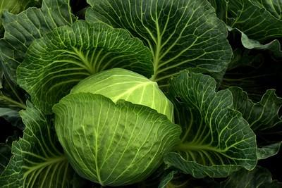 高麗菜是抗癌明星!可治便秘、補鈣...「這樣煮」才能留住營養