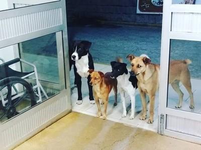 四隻流浪狗「列隊守候醫院門口」!不吵不鬧等流浪漢主人出院回家