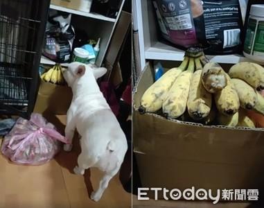法鬥偷吃蕉被逮 秒衝媽懷裡解釋