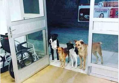 巴西街友半夜求診 4隻狗狗站門口等