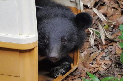 南安小熊搬往森林野訓場訓練回家