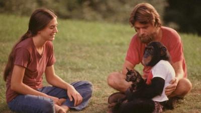 猩猩當人類撫養!實驗失敗關回籠子 照顧者被高舉:我以為要死了