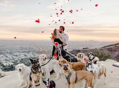 男友牽16隻萌犬求婚 畫面超美!