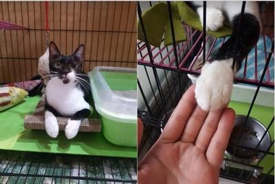 親人撒嬌「每餐罐頭都吃光」 板橋極品貓滯銷1年:是不是我太醜?