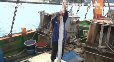 花蓮清晨5.6地震!漁民就捕獲「2米長地震魚」