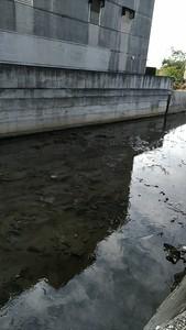 「凝固劑染紅溪」水泥廠先罰250萬