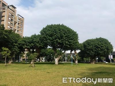 樹木委會審議 新北增9株老樹