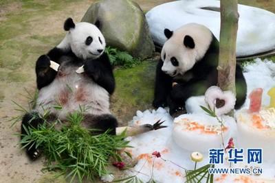 馬來西亞打算退還大熊貓夫妻