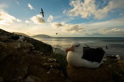 英國小島販售!島上塞滿大量企鵝