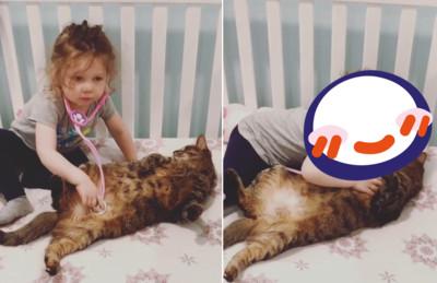 貓咪生病了!醫生用超暖治療方式