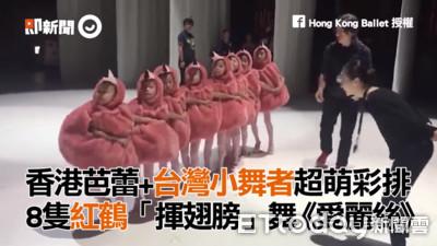 8隻「小紅鶴」跳芭蕾 揮翅模樣萌翻