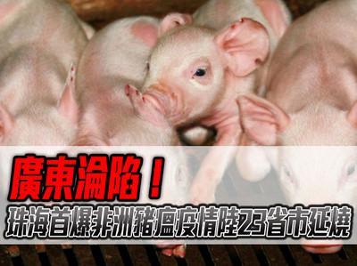 影/廣東淪陷 珠海首爆非洲豬瘟疫情