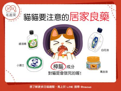 恐致死!人類的「4居家良藥」竟是貓咪的毒藥...小護士上榜