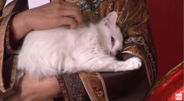 ▲孫儷領養貓咪。(圖/翻攝自YouTube)