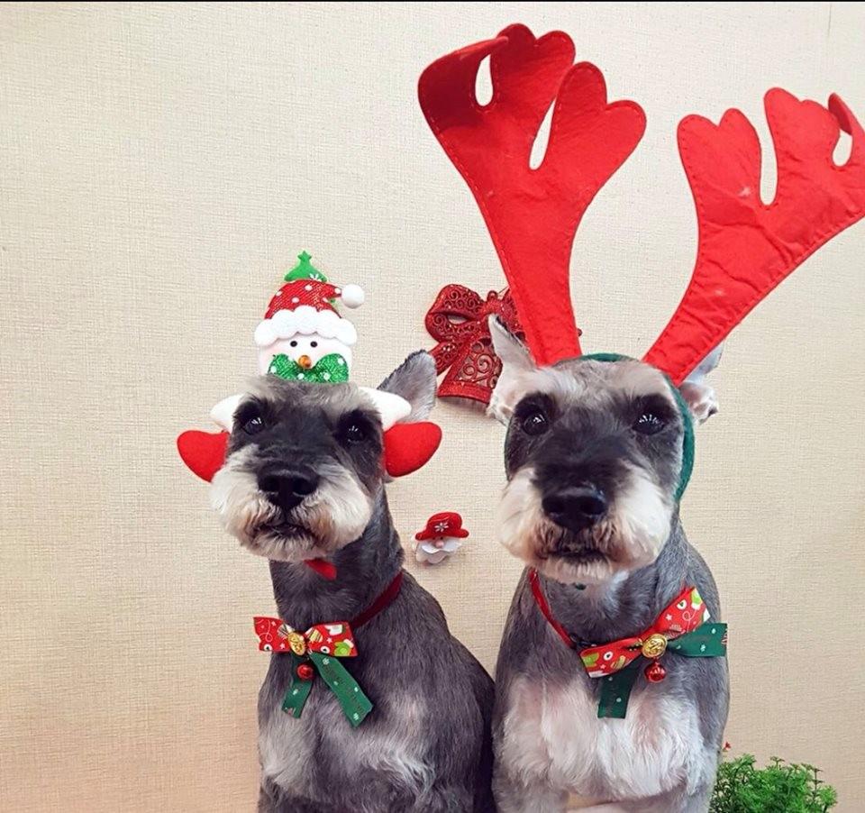 ▲寵物聖誕之星。(圖/ETtoday東森寵物雲)