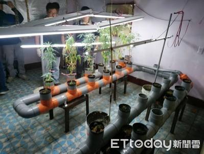 兩水電工倫敦網購 栽種做發財夢