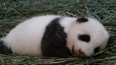 不覺得動物睡著後 萌度根本開掛嗎