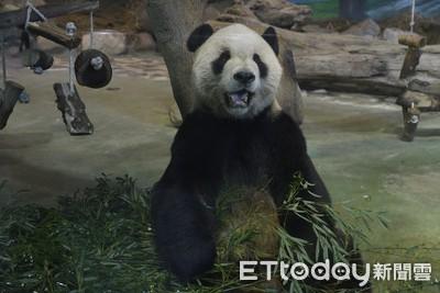 養貓熊年花7千萬 律師嘆:石虎呢