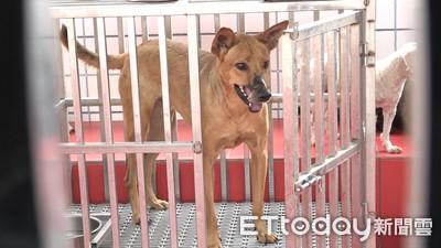 無照受託寄養寵物 最高可開罰300萬