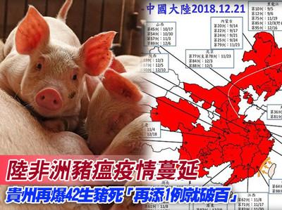 貴州再爆非洲豬瘟 42生豬發病死