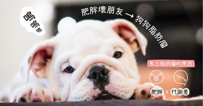 肥胖壞朋友—狗狗脂肪瘤