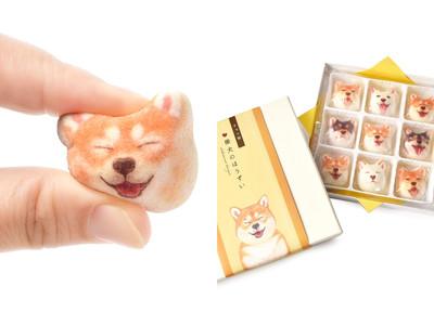 柴犬控大愛!超療癒動物系棉花糖
