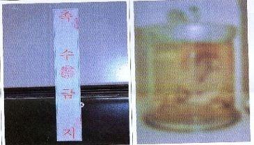 ▲▼明月標本(圖/翻攝自문화재제자리찾기)