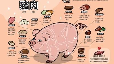 老鼠肉長在豬身上!2張圖看完豬肉冷知識…呃桃園豬真不是罵人?