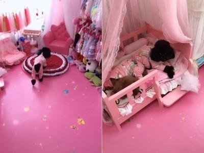 汪的粉紅公主房超豪華 還掛滿衣服