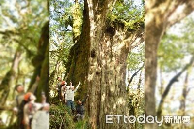 台灣首見!千年紅檜木群驚喜曝光