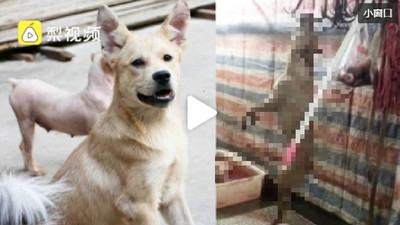 毛孩被剝皮屠殺 女飼主崩潰:我的狗