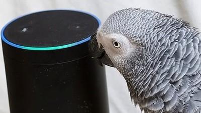 鸚鵡「使喚智能音響」訂購零食!主人退貨發現:都只買你愛吃的