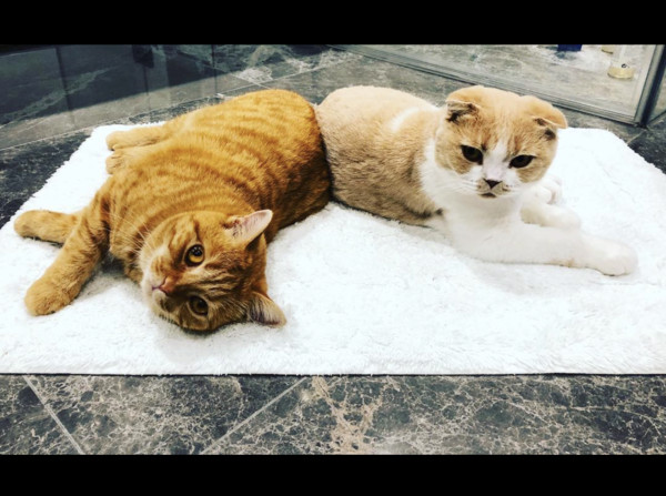 ▲紅髮艾德的愛貓Dorito和Calippa。(圖/翻攝自Instagram/thewibbles)