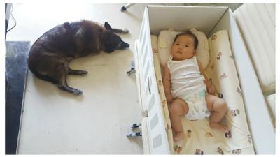 有毛兄姊的寶貝最幸福!5點教狗狗認識寶寶 給孩子珍貴的成長禮物