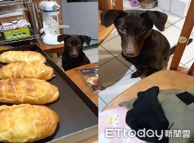 叮咚麵包出爐!狗狗叼襪子來交換