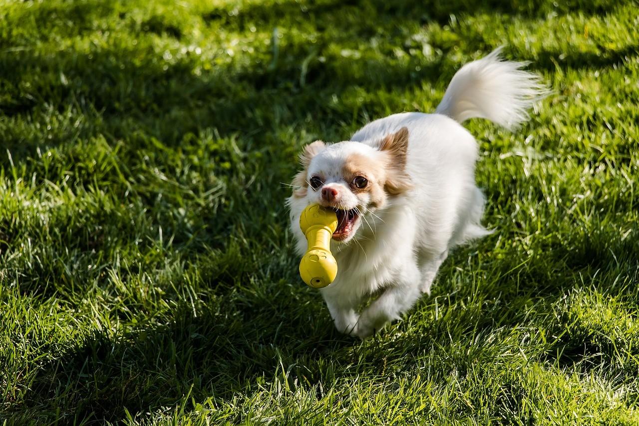 ▲狗狗玩玩具。(圖/取自pixabay)