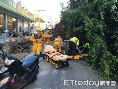 排水溝工程挖到樹!倒塌壓傷2騎士