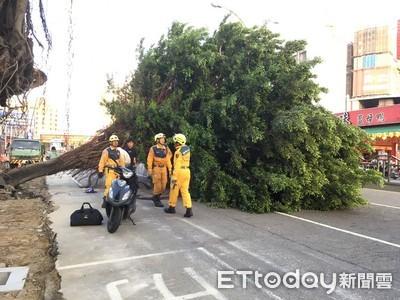 台中巨大路樹倒塌壓4車 女騎士下半身沒知覺
