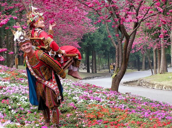 「九族櫻花季」的圖片搜尋結果