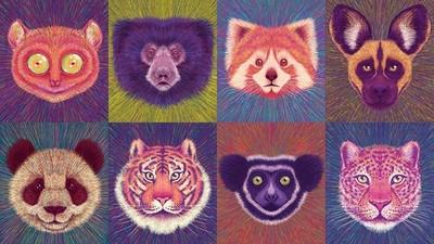 再可愛也瀕臨絕種! 「動物勸世年曆」細筆畫出牠們的倒數計時