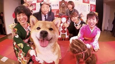 日本元旦「生肖交接」 萌柴交棒給金豬!跟老虎交接的都超哀怨