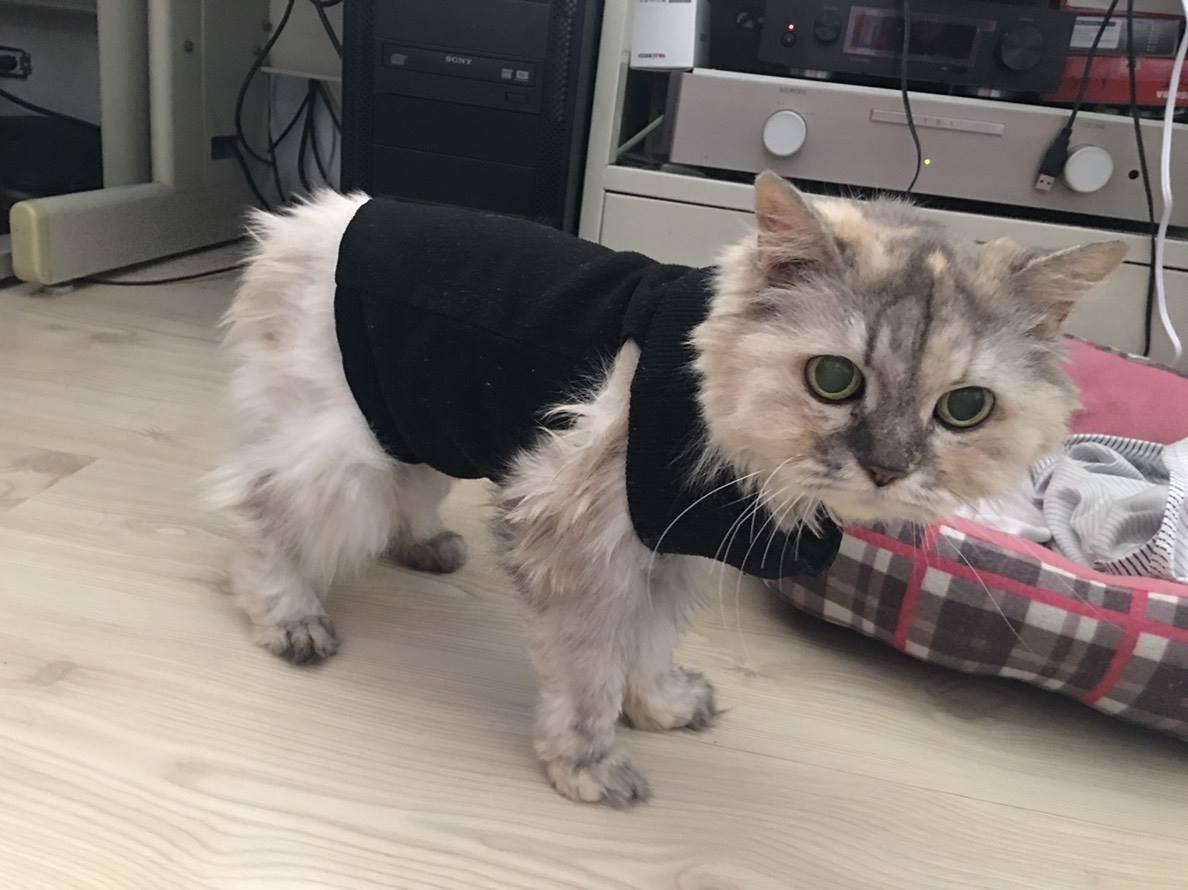 ▲腎衰竭老貓 。(圖/玄心提供)